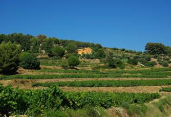 Les bastides de Chateau Canadel, au coeur du vignoble