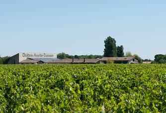 Le vignoble du Château Hourtin-Ducasse