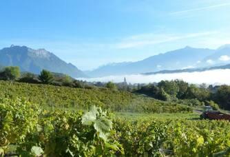 Le vignoble du Domaine de l'Idylle