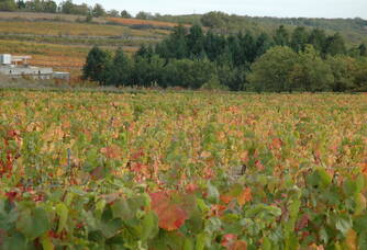 Vue sur les vignes du domaine des Roques de Cana