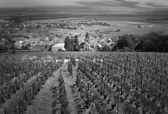 Au coeur des vignes du Champagne Philippe Gonet