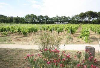 Au coeur des vignes du Domaine de Cabasse