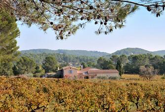 Au coeur des vignes du Domaine Rabiega