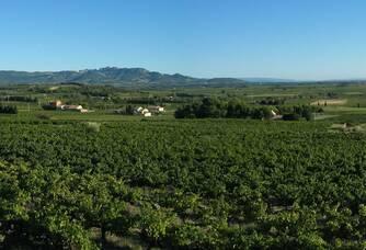Le vignoble du Domaine Rabasse Charavin