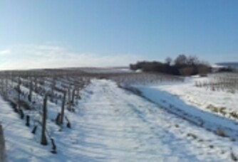 Le vignoble du Domaine du Roure sous la neige