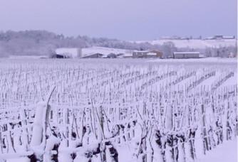 Le vignoble sous la neige du Château de Bertin