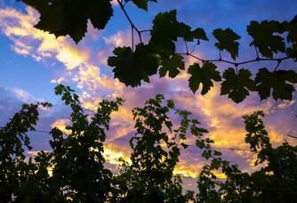 Soleil couchant au Domaine Badiller