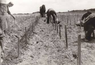 Plantation de la vigne au Château de la Hourcade