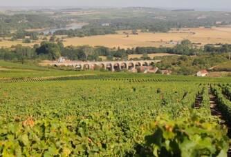 Le vignoble du Domaine Joesph Mellot