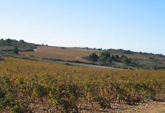 Le vignoble du Château Haut-Blanville