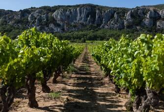 Vue entre les vignes du Domaine Les Cailloux