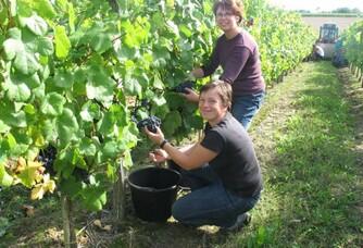 Brigitte et Corinne pendant les vendanges au domaine Sergent
