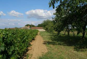 Un autre point de vu des vignes du Domaine de la Tourlaudière