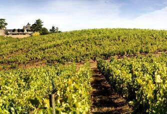 Vue sur les vignes du Château Soucherie
