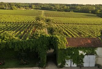 Le vignoble de la Famille Ducourt