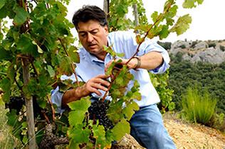 Le top des vignerons du Rhône